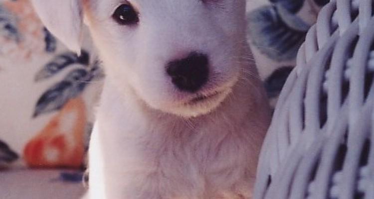 Blog , Ansiedad por separación en el perro